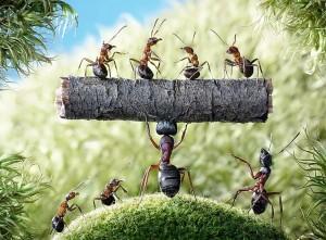 Funny-Ants-HD-Wallpaper