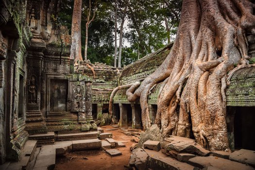 tree-roots-concrete-pavement-7