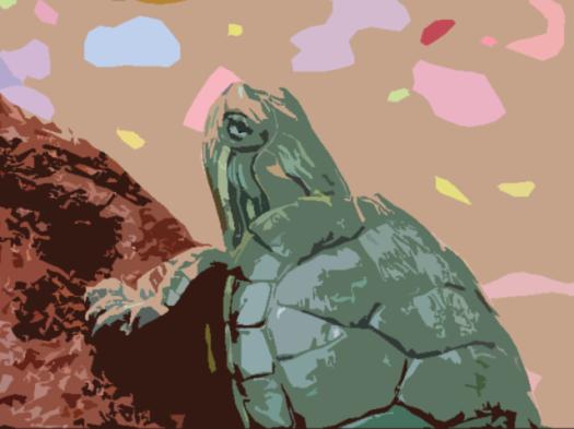 schildpad.png