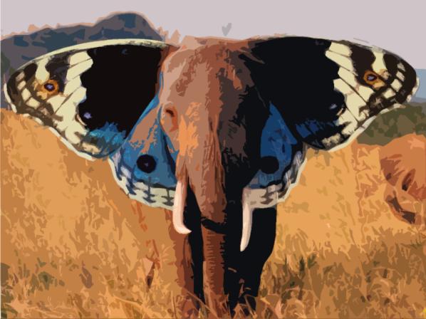 vlinderkracht