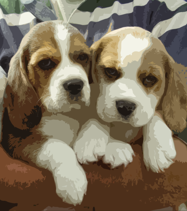 beagles.png