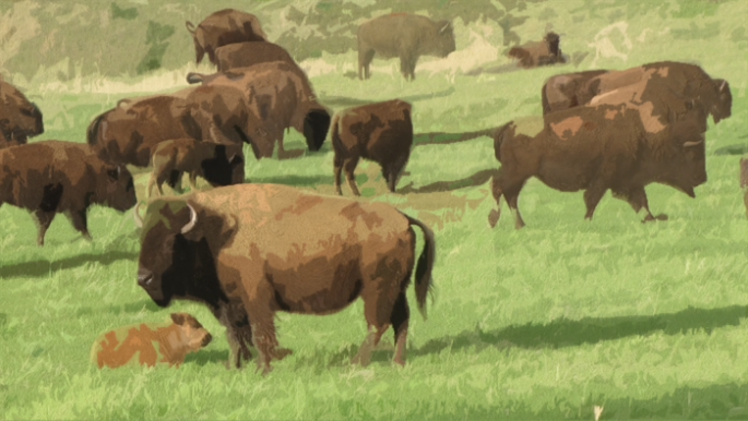 bizon.png